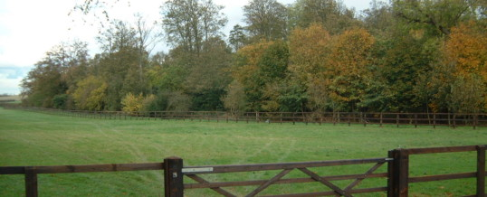 Paddock fencing – Newmarket